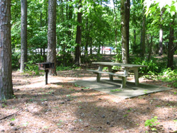A Galt's Ferry picnic site located under the pines