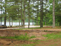 Open pine woods and Lake Acworth